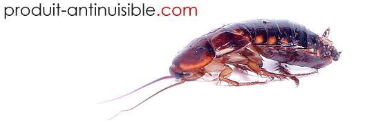 anti blattes conseils et infos pour lutter contre les blattes. Black Bedroom Furniture Sets. Home Design Ideas
